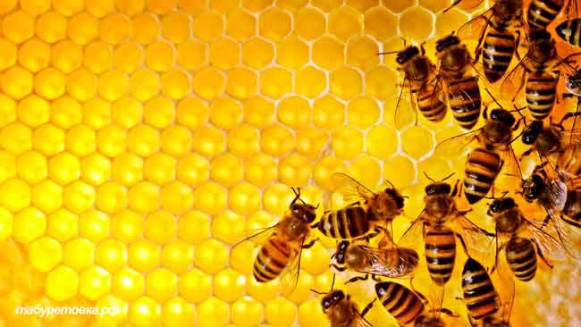 Сорта натурального мёда