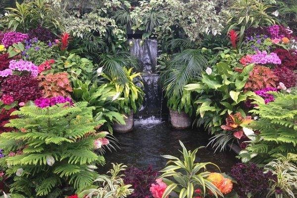 Водоём, цветы, растения