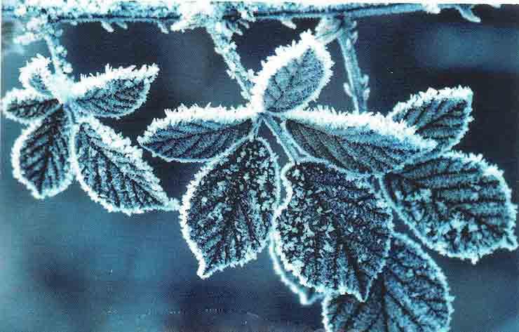 зима, листья, заморозки