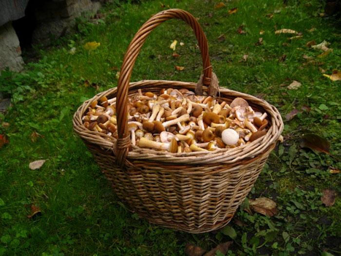 Выращивание грибов дома не только вкусно, но и прибыльно