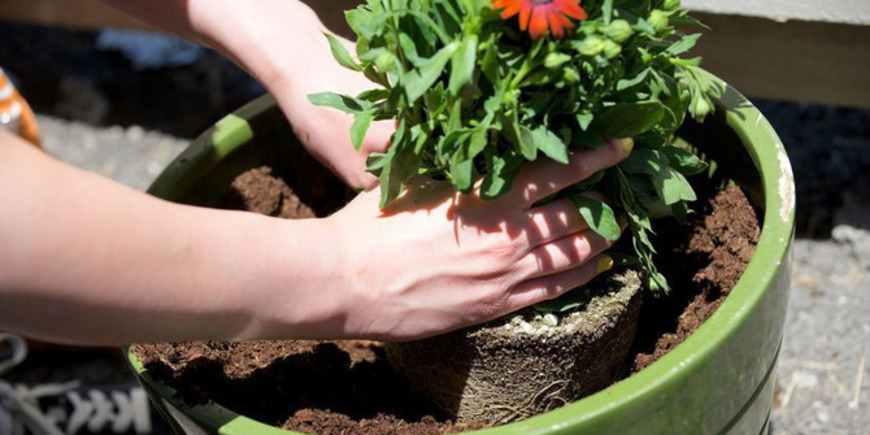 Пересаживаем комнатные растения